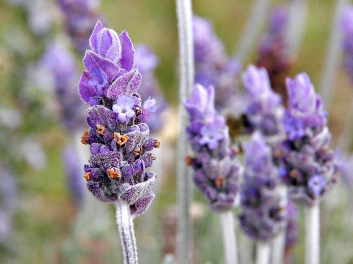 Morning Lavender OnlineBoutique